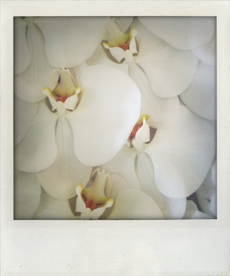 Real orchids for her hair Photo : Selena Gomez